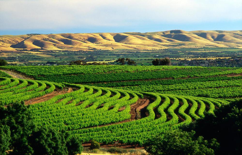 Next Crop Wines in McLaren Vale 2